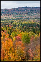 Northwoods landscape in autumn. Maine, USA (color)