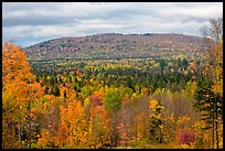 Northern forest landscape in autumn. Maine, USA (color)