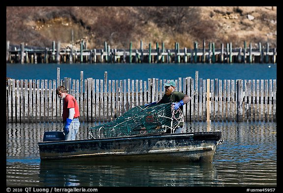 Lobstermen hauling traps. Stonington, Maine, USA (color)