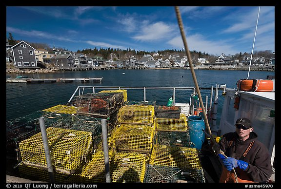 Lobsterman in boat with traps, and village in background. Stonington, Maine, USA (color)