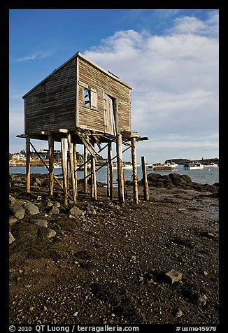 Shack on stills and harbor. Corea, Maine, USA (color)