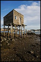 Shack on stills and harbor. Corea, Maine, USA ( color)