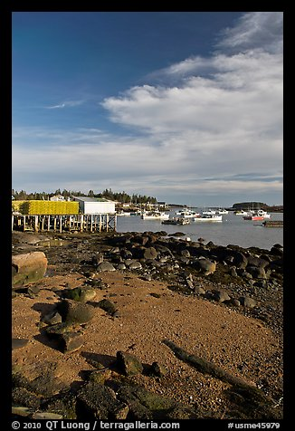 Lobster fishing fleet in harbor. Corea, Maine, USA (color)