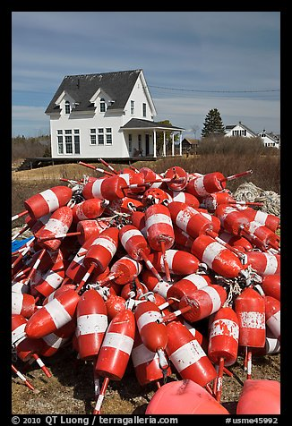 Colorful lobstering buoys. Corea, Maine, USA