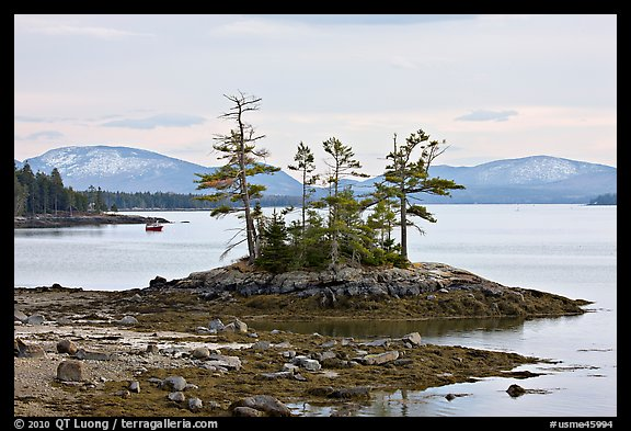 Islet with trees and low tide, and Frenchman Bay. Maine, USA (color)