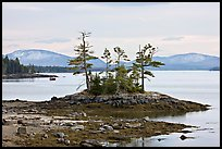 Islet with trees and low tide, and Frenchman Bay. Maine, USA ( color)