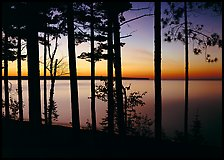 Trees and sunset, Lake Superior. Upper Michigan Peninsula, USA
