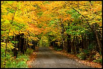 Rural road with fall colors, Hiawatha National Forest. Upper Michigan Peninsula, USA (color)