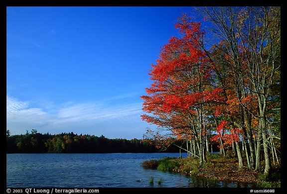 Lake with red maple in fall colors, Hiawatha National Forest. Upper Michigan Peninsula, USA (color)