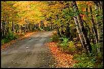 Rural road with fall colors, Hiawatha National Forest. Upper Michigan Peninsula, USA