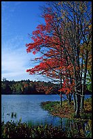 Lake with red maple in fall colors, Hiawatha National Forest. Upper Michigan Peninsula, USA