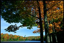 Tree and lake, Hiawatha National Forest. Upper Michigan Peninsula, USA ( color)