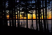 Lake Superior seen through dense trees at sunset,  Pictured Rocks National Lakeshore. Upper Michigan Peninsula, USA