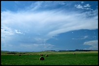 Hay rolls and storm cloud. North Dakota, USA ( color)