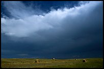 Hay rolls under a storm cloud. North Dakota, USA ( color)