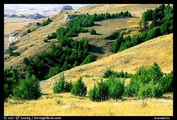 Trees and grasses. Scotts Bluff National Monument. South Dakota, USA (color)