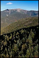 Conifer treetops and mountains, White Mountain National Forest. New Hampshire, USA (color)