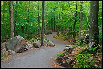 Trail in forest, Franconia Notch State Park. New Hampshire, USA (color)