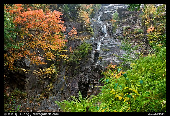 Ferns, watefall, and trees in fall colors, White Mountain National Forest. New Hampshire, USA (color)