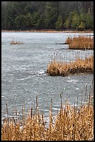 Reeds and frozen pond. Walpole, New Hampshire, USA ( color)