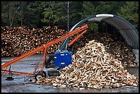 Pile of timber logs. New Hampshire, USA (color)