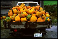 Truck loaded with pumpkins. New Hampshire, USA ( color)