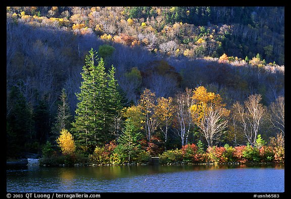 Trees on rocky islet, White Mountain National Forest. New Hampshire, USA (color)