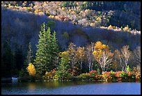 Trees on rocky islet, White Mountain National Forest. New Hampshire, USA