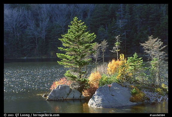 Trees on small rocky islet, Beaver Pond, Kinsman Notch. New Hampshire, USA (color)