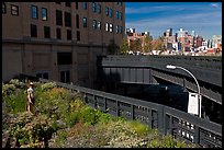 Garden on the High Line. NYC, New York, USA (color)