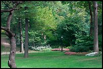 Lawn, trees, and flowers, Central Park. NYC, New York, USA