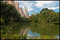 Pond and high-rise buildings, Central Park. NYC, New York, USA (color)