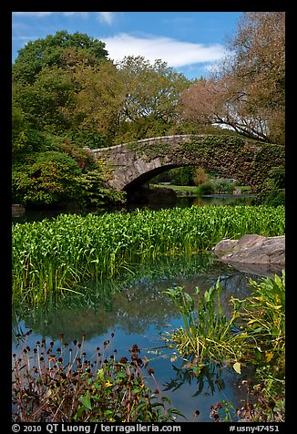 Aquatic plants and stone bridge, Central Park. NYC, New York, USA (color)
