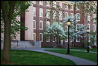Columns, brick buildings, flowering dogwoods, and gas lamps, Brown University. Providence, Rhode Island, USA (color)