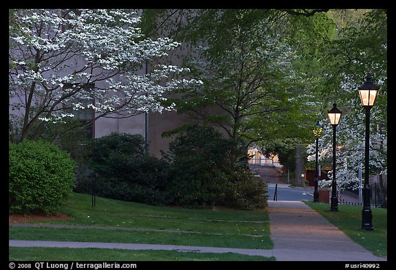 Walkway, lamps, and trees in bloom on Brown University campus. Providence, Rhode Island, USA