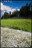 Hailstones in meadow, Black Hills National Forest. Black Hills, South Dakota, USA ( color)