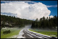 Clearing hailstorm, Black Hills National Forest. Black Hills, South Dakota, USA (color)