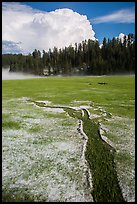 Meadow with hailstones, hail storm clearing, Black Hills National Forest. Black Hills, South Dakota, USA ( color)