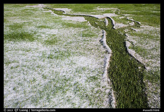 Hailstones form pattern in meadow, Black Hills National Forest. Black Hills, South Dakota, USA (color)