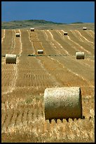 Rolls of hay in summer. South Dakota, USA (color)