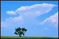Isolated tree and cloud. South Dakota, USA