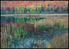 Autumn Reflections, Green Mountains. Vermont, New England, USA ( color)