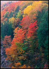 Multicolored trees on hill, Quechee Gorge. USA ( color)