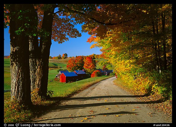 Maple trees, gravel road, and Jenne Farm, sunny autumn morning. Vermont, New England, USA