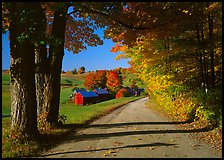 Maple trees, gravel road, and Jenne Farm, sunny autumn morning. Vermont, New England, USA ( color)