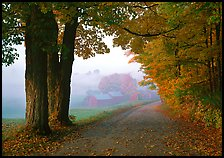 Maple trees, gravel road, and Jenne Farm, foggy autumn morning. Vermont, New England, USA