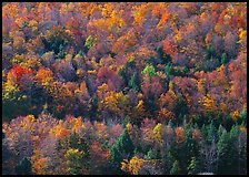 Hillside with trees in colorful fall foliage. Vermont, New England, USA