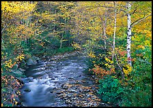 Stream and birch trees. Vermont, New England, USA ( color)