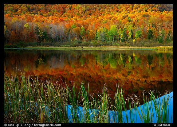 Reeds, and reflection of hill, Green Mountains. USA (color)