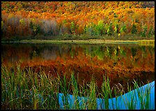 Reeds, and reflection of hill, Green Mountains. Vermont, New England, USA